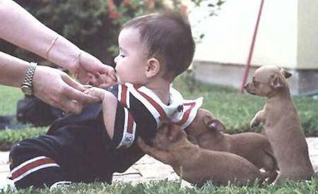 http://jenlars.mu.nu/puppies_baby.jpg